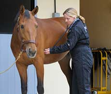 Can your horse's gut protect his health?