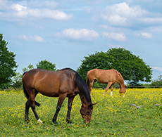 How to spot summer pasture allergy