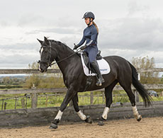 How your horse's personality can affect reinforcement training