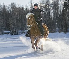 Three exercises to help focus a sharp horse