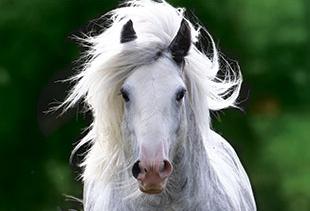 Horse, Veteran and Rider Insurance