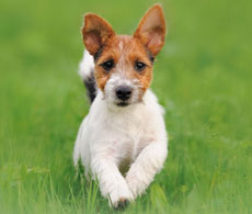 Dog insurance from Petplan