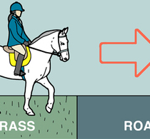 How to avoid equine concussion