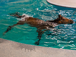 What is horse hydrotherapy, and how is it useful?