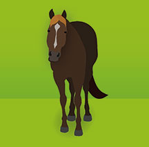 Top 5 Equine Health Problems