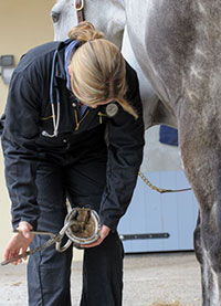 Most Common Horse Illnesses And Injuries Revealed By